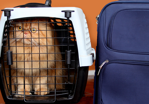 Cães e gatos devem estar com exames e vacinas em dia para serem levados ao exterior