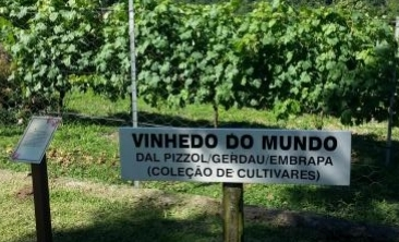 vinhedo do mundo