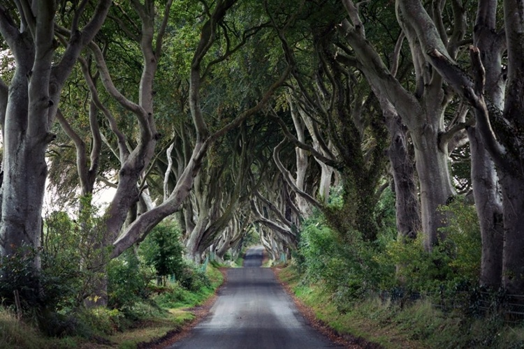 A Dark Hedges, Irlanda