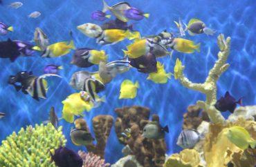 aquario2
