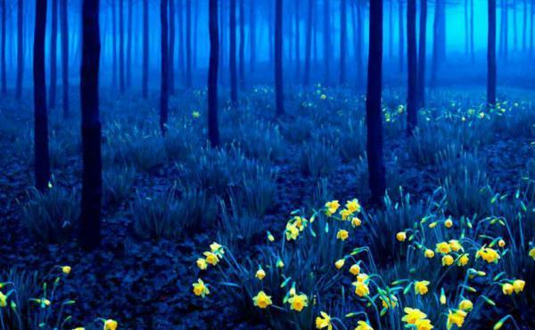 Bosque Negro, Alemanha (Andy Linden)