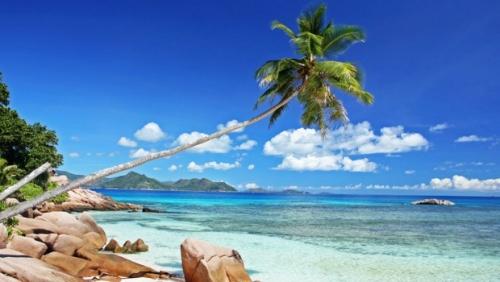 Cocotier, beach, Seychelles, Anse severe, La Digue 620x350