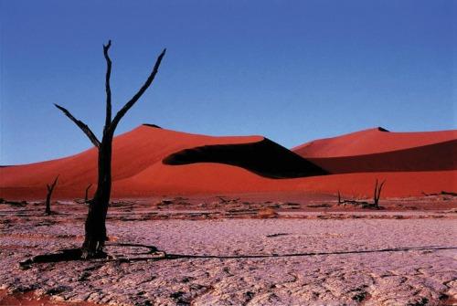 Deserto do Kalahari 500