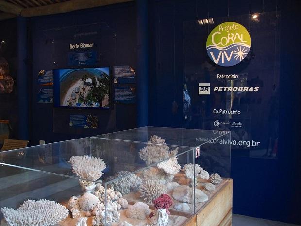 Esqueletos de colônias centenárias de corais encontradas pelo mundo