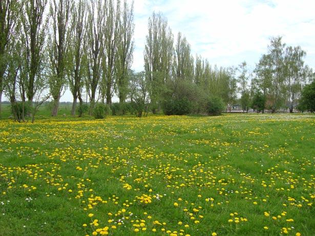 Esse-é-o-campo-de-concentração-de-Neuengamme