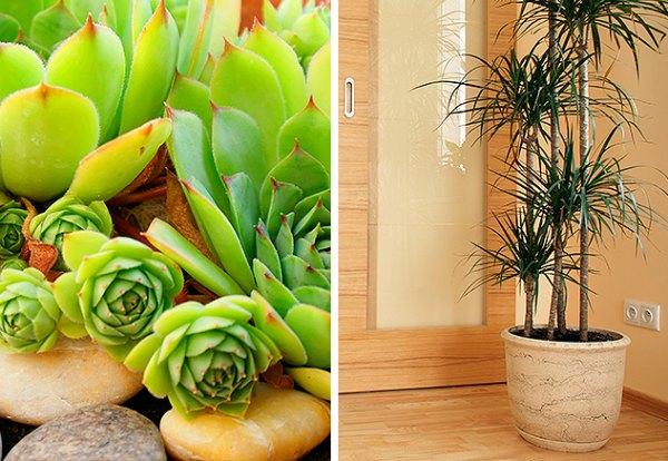 FloresCasa-Plantas-632x436