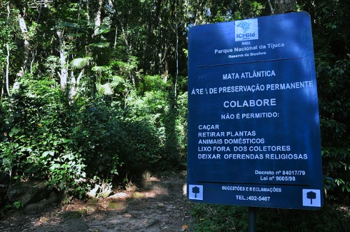 Floresta da Tijuca - Foto Alexandre Macieira