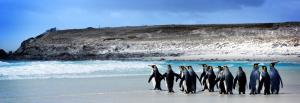 Ilhas Malvinas/Falklands - Pinguins