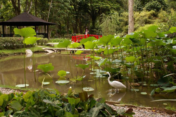 Os 5 jardins com projetos paisagísticos mais bonitos do Rio de Janeiro