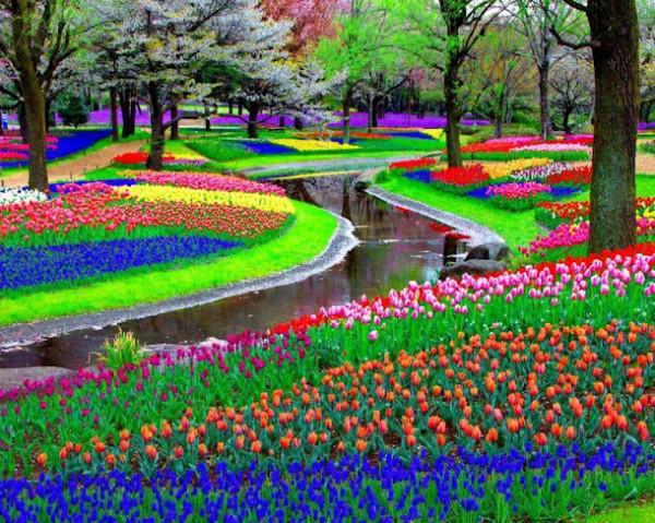 Jardins-de-Keukenhof-Amsterdam-Holanda.jpg-9-600x479