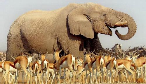 Kalahari 500