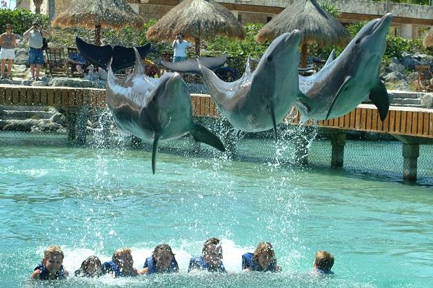 México - Nado com golfinhos