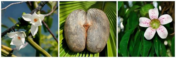 Natureza de Seychelles