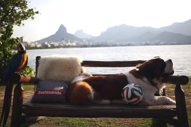 O São Bernardo Ruffus é o mascote da Suíça na Copa do Mundo.