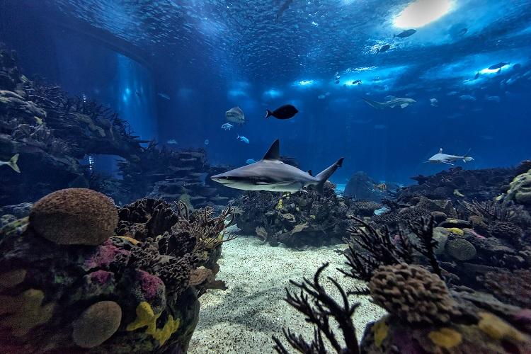 Oceanário de Lisboa é escolhido como o melhor aquário do mundo 1