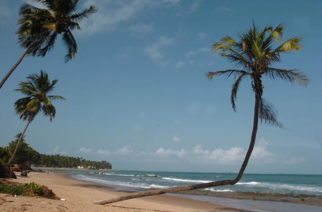 Praia de Japaratinga II