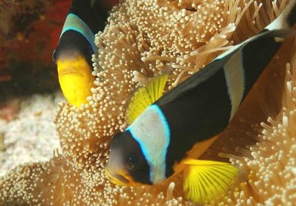Seychelles peixes