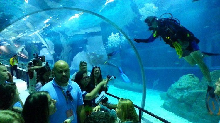 Festa no AquaRio