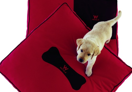 W Hotels Dog Bed500