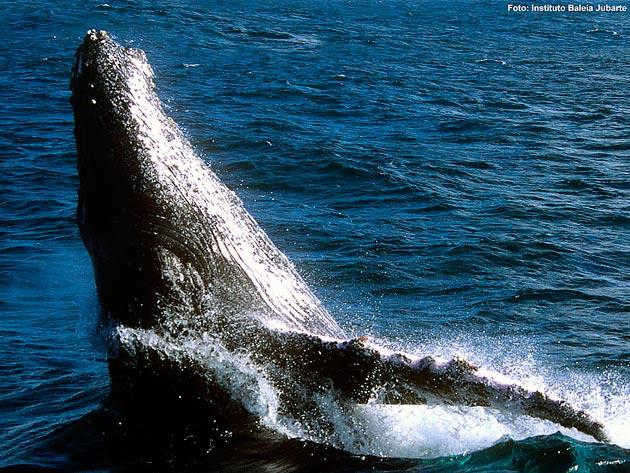 baleias-turistas-chegam-a-bahia