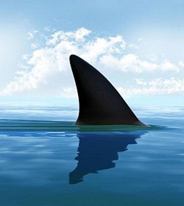 barbatana tubarão