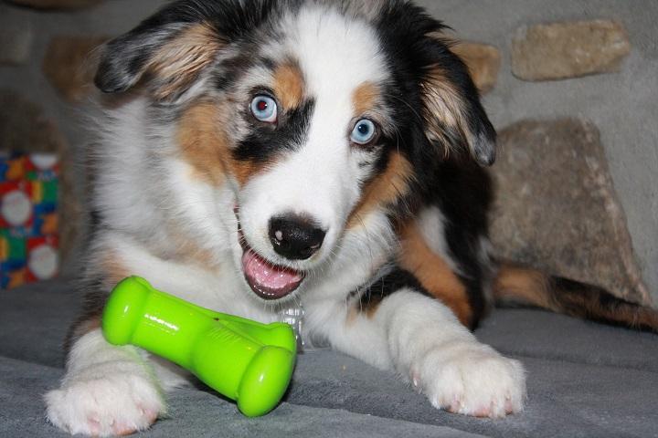 Adote um Pet com Deficiência – 2ª edição acontece em setembro