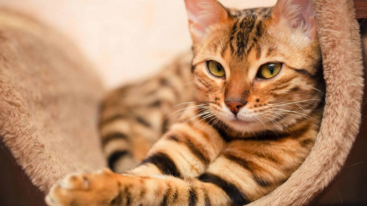 cat_bed_shutterstock_142870015-1