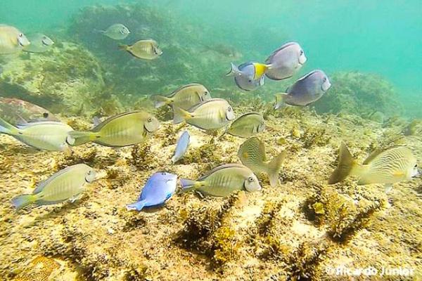 foto-mergulho-peixes-em-fernando-de-noronha_640