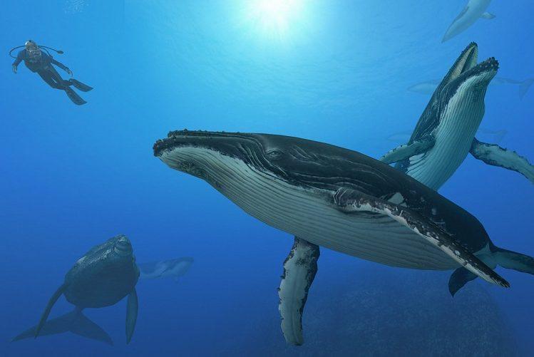 Confira o show das baleias jubarte no Pacífico Mexicano