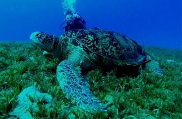 mergulho-tartaruga1