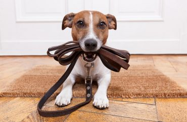 shutterstock_dog+walk
