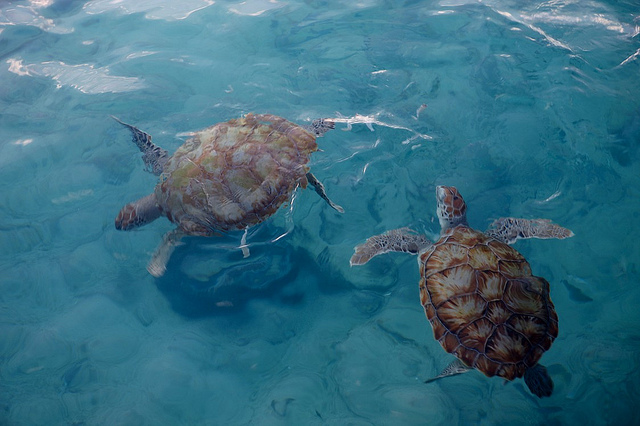 tartarugas marinhas