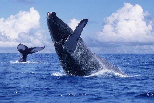 whale500